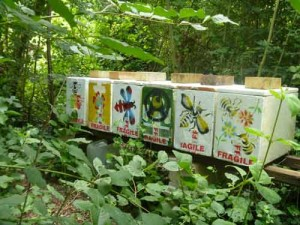 ruches en couleurs