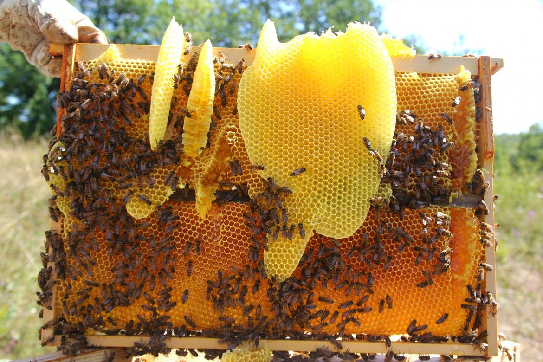 Cire_d'abeille