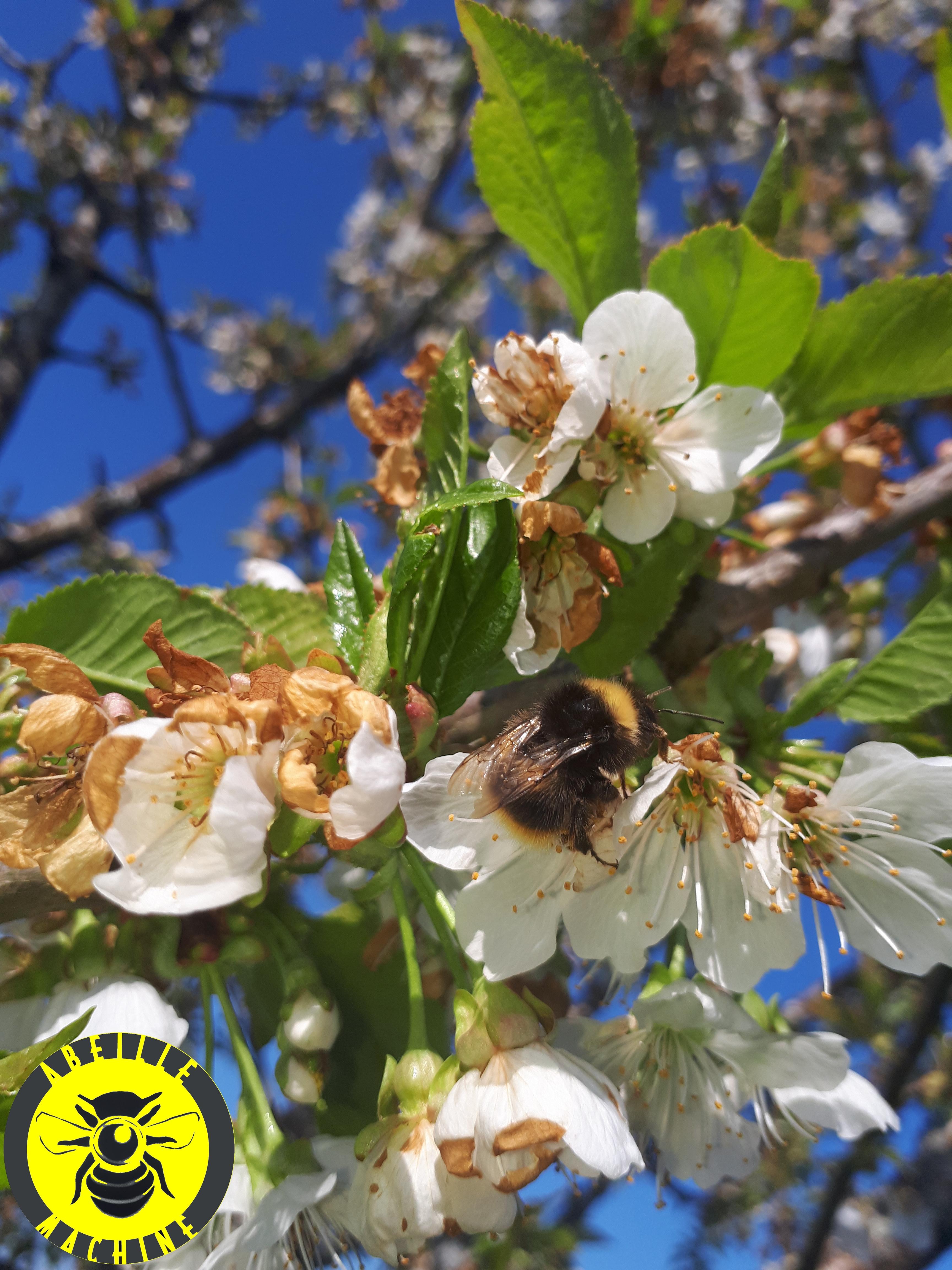 Bibliothèque De Fontenay Sous Bois pollinisateurs urbains |